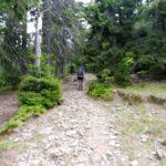 17. Z długiego i męczącego trawersu lasem...