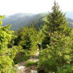 28. ...a z przełęczy ostro w górę rzadkim lasem...