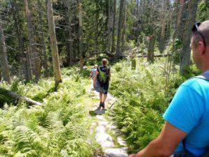 10. Ruszyliśmy żółtym szlakiem górnoreglowym lasem...