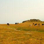 28. Na stokach pasło się stado osłów...