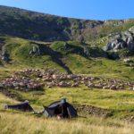 64. Po chwili ponad obozem stado owiec pomaszerowało w góry...