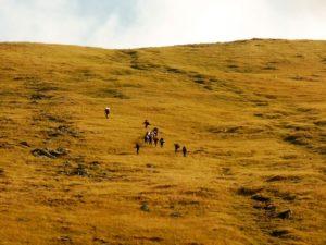 66. 14-tka miłośników szczytów najwyższych ruszyła w górę stoku...