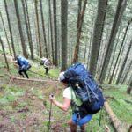 90. Schodziliśmy wyrypiastym stokiem leśnym do doliny potoku Şes...