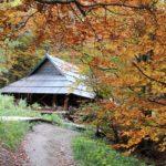 54. …w ciepłych barwach jesieni.