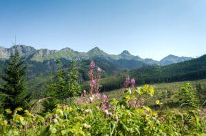 6. …z widokiem na tatrzańskie szczyty.