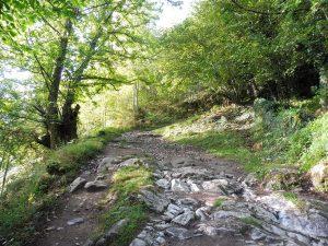 54. …a potem skalistą ścieżką przez las.