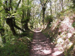 82. …i idę lasem prześwietlonym słońcem.