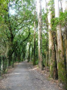 135. …i las dębowo-eukaliptusowy.