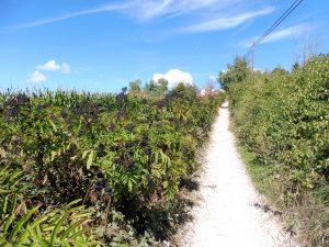 58. …i musiałam iść do oddalonego o 4,5 km Obanos…