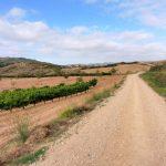 72. Długi czas szlak wiódł łagodnymi wzgórzami wśród pól pszenicznych i winnic…