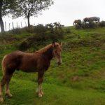 12. Na podejściu towarzyszyły mi pasące się konie…