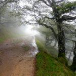 15. Przed przełęczą Bentarte drzewa przybrały fantazyjne kształty…