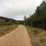 160. …prowadzącej jeszcze 6 km lasem sosnowym.