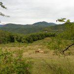 25. …i malownicze pogórze Pirenejów.