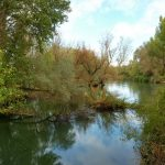 51. …i długi czas szlak wiódł wzdłuż rzeki Pisuerga.