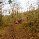 101. Atrakcją długiego zejścia lasem były pasące się osły…