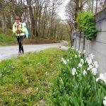 112. Wzdłuż ogrodzenia kwitły białe kosaćce…
