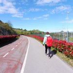 146. Szłyśmy ścieżką przy trasie rowerowej…
