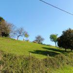 149. Znów towarzyszą nam stada owiec, mandarynki na drzewach…