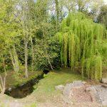 151. …i cała w świeżej zieleni wierzba nad potokiem.