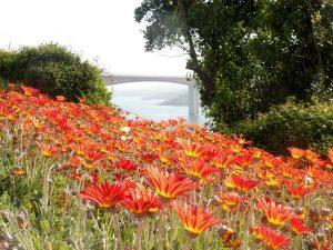 73. …a most cudnie się prezentował nad gazonem kwiatów.