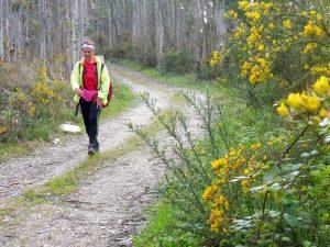 84. …a w lesie eukaliptusowym kwitł żarnowiec czyli sarnia trawa.