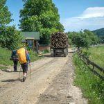 104. Wkrótce za samochodami z drzewem z lasu dotarliśmy do Osmołody…