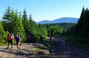 5. Podchodziliśmy rozjeżdżoną drogą leśną…