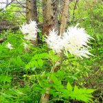 4. …i kwitnącym parzydłem leśnym…