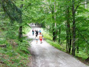 41. …ale my szliśmy drogą leśną w otoczeniu…