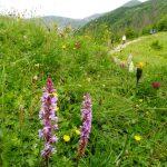 60. …schodziła do polany Piec kwitnącej storczykami…