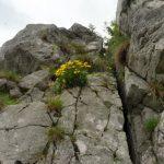 61. …i pępawą Jacquina na skale.