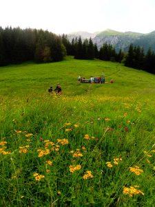 8. …kwitnącą tysiącem kwiatów.