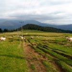16. Szliśmy ku przełęczom w kierunku gór Ţarcu…
