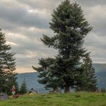 18. Pierwsza grupa rozbiła się na polanie przed Şeroni…