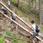 9. Utrudniały podejście zwalone pnie drzew…