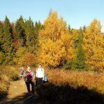 5. Idąc łąkami ku ścianie lasu patrzyliśmy…