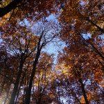 51. Kolorowy las zamykał się nam nad głową…