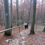 56. Na stromym stoku zainstalowano barierki…