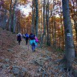 7. Leśna droga w bukowym lesie pięła się w górę…